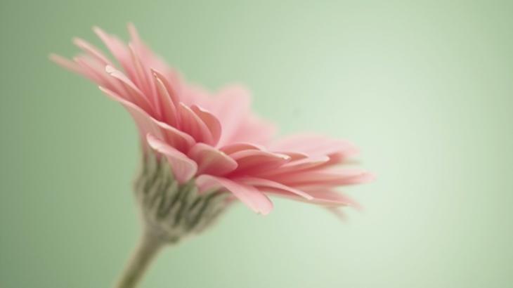 ある時から玄関先に一輪の花が置かれるようになった。送り主は義妹の同級生で両思いだったこともあり交流がスタート。このことを義母がご近所友達に話したら…
