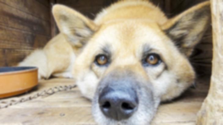 義母「きっと私を守ってくれたのね…」先日、長年飼っていた犬が老衰で亡くなったのだけど犬小屋を片付けていたら100万円の入った封筒が出てきた…