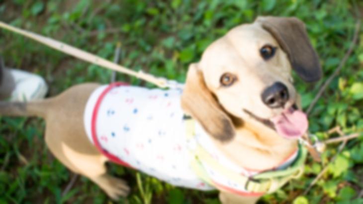 警察「ある公園でお宅の犬に噛まれた人がいるみたいで…」特徴はまさにうちの子なんだけど、身に覚えがなかった。すると後日、警察から電話がかかってきて…